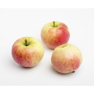 Apfel Elstar